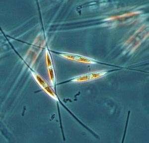 Nanotech Solar Panels