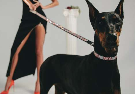 Luxury Dog Wear Lines - Very Important Puppies and GCDS Released a New Collection