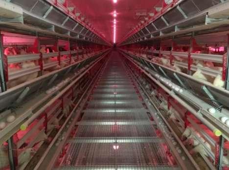 Computerized Chicken Barns