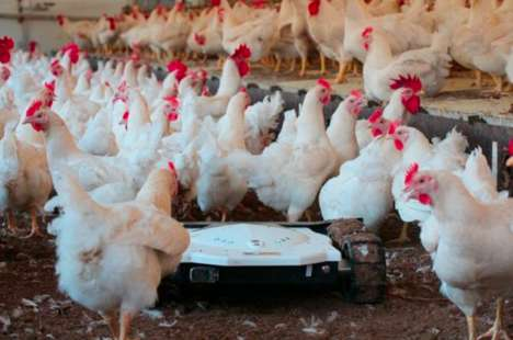 Effective Chicken Coop Robots