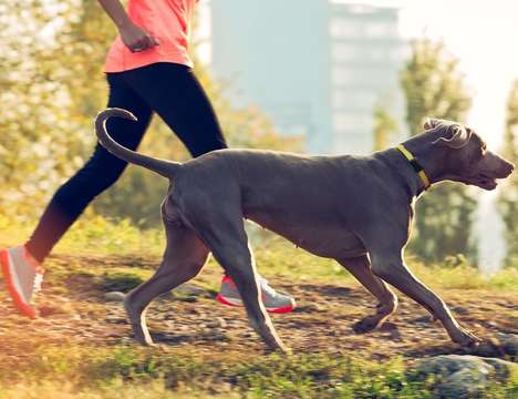 Fitness-Tracking Canine Wearables