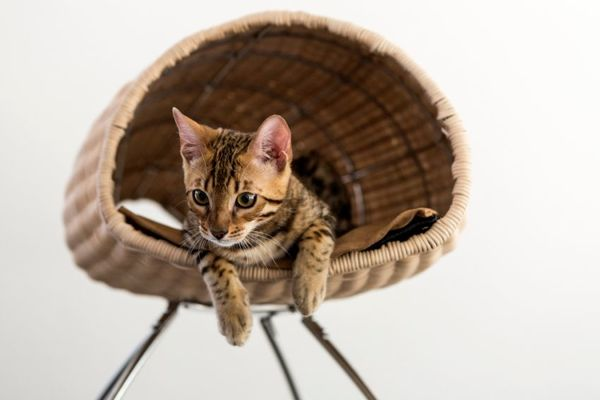 17 Examples of Feline-Friendly Furniture