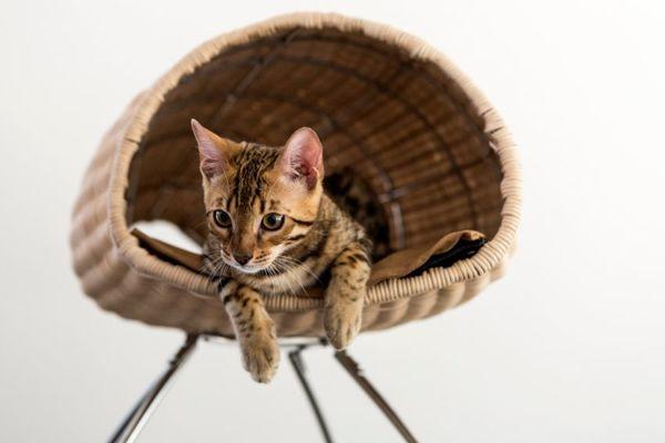 17 Examples of Feline-Friendly Furniture
