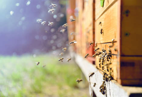 Bee-Friendly Corporate Iniatives