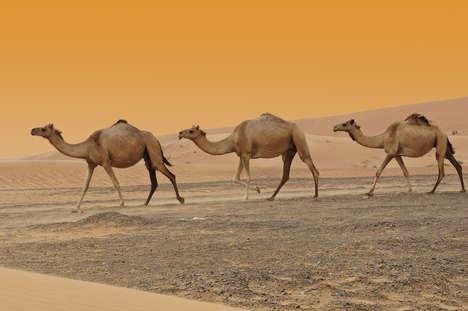 Charitable Camel Milk Coffee