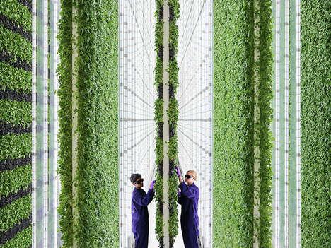 Flavor-Focused Vertical Farms