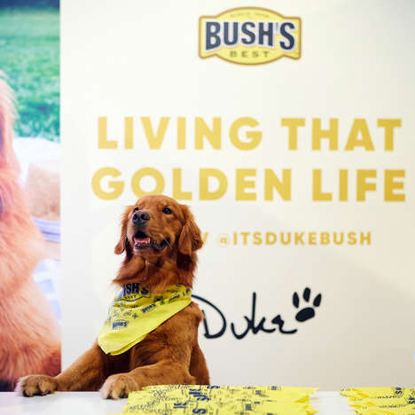 Canine Brand Ambassadors - BUSH'S Spokes-Dog Duke Now Has His Own Instagram Account