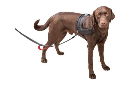 Humane Versatile Dog Accessories - Halo Harness is a Multipurpose Dog Harness That is Car-Friendly
