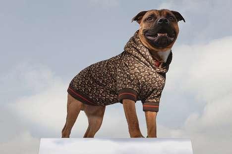 Luxurious Stylish Dog Hoodies