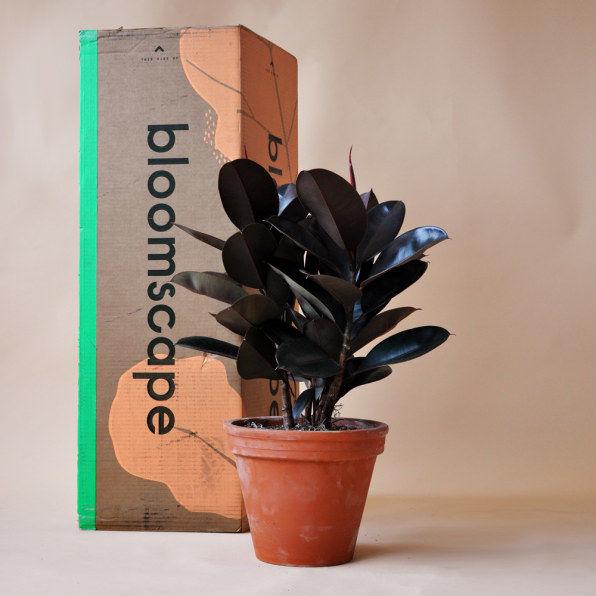 10 Online Plant Shops