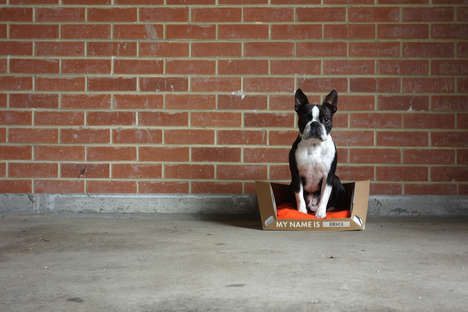 Recyclable Flat-Pack Dog Beds