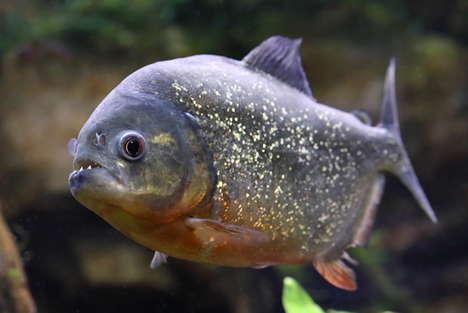 Daring Piranha Ramen Dishes