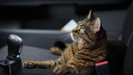 Pet-Friendly Rideshare Features