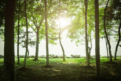 Toronto-Based Tree Planting Strategies