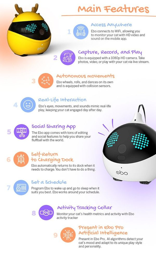 Interactive Cat Companion Robots : 'ebo' pet companion robot