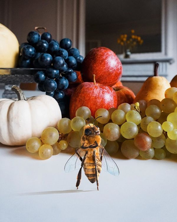 Fundraising Insect Influencers : bee influencer