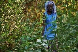 Impactful Tree-Planting Organizations