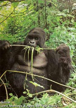 Primate Rehab