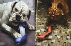 Canine Fashion Editorials