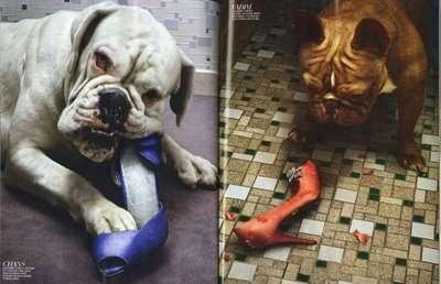 Canine Fashion Editorials