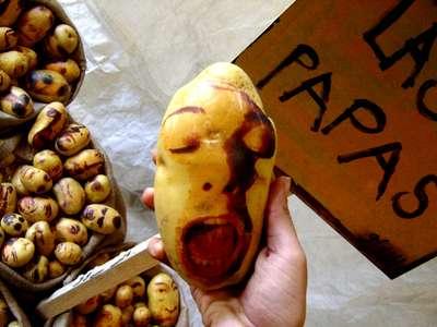 Potato Portraits