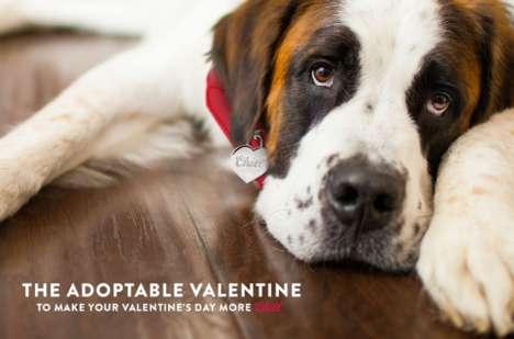 Beer-Branded Pet Adoption Ads