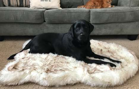 Orthopedic Machine-Washable Dog Beds
