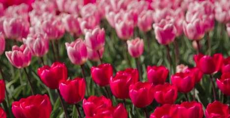 Virtual Tulip Gardens