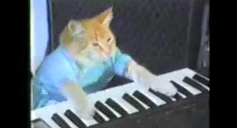 Feline Pianists
