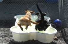 Splash Pools for Dogs