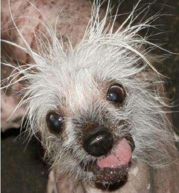 Creepy Celebrity Canines