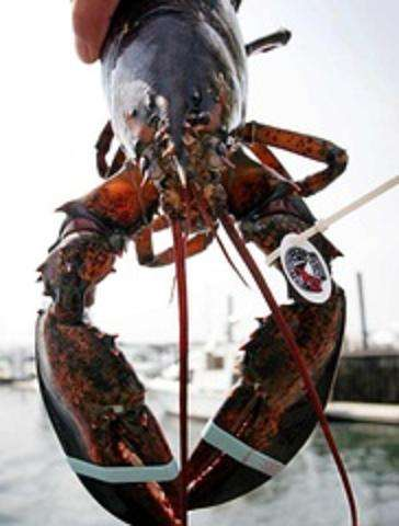 Crustacean Competitions
