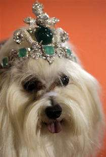Canine Crowns