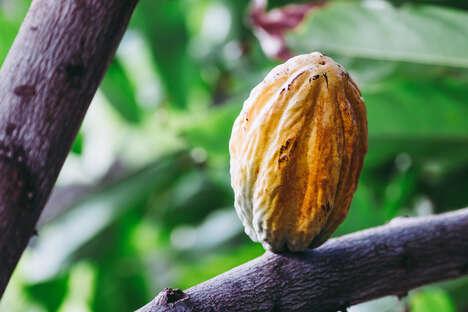 Upcyled Cocoa-Based Sweeteners