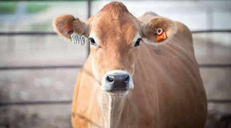 Cow-Targeted Ear Sensors