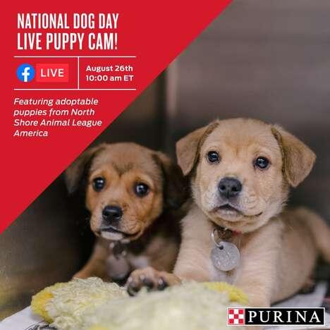 Informative Puppy Adoption Events