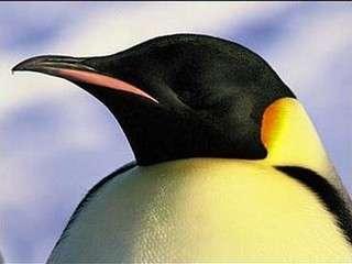 Penguin Poo Pursuits