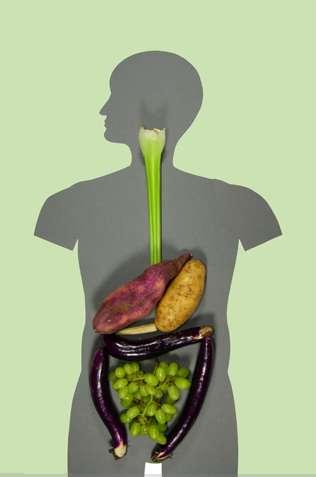 Vegetable Organs
