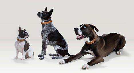 Health-Tracking Dog Collars