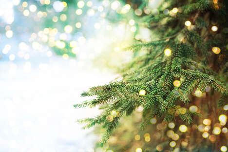 Eco-Friendly Live Holiday Trees