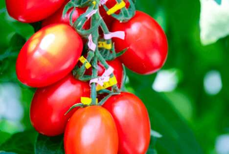 Gene-Edited Food Technologies