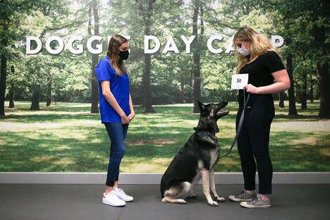 Stimulating Dog Training Courses