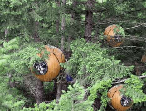 Personal Tree Pods