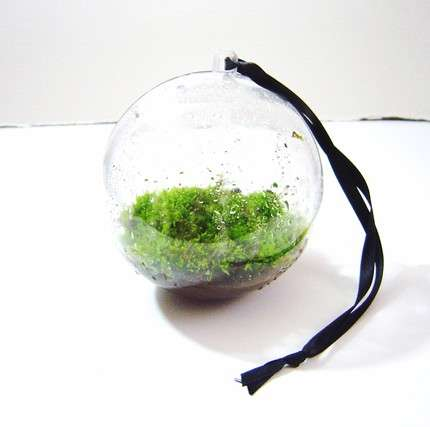 Miniature Moss Gardens - Patricia Buzo Turns the Lush Softness of Moss into Beautiful Artwork