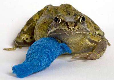 Broken Pet Photoblogs - 'F&%k Yeah Animals With Casts' Features Animals On the Mend