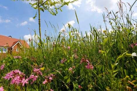 Community Wildflower Planting Kits