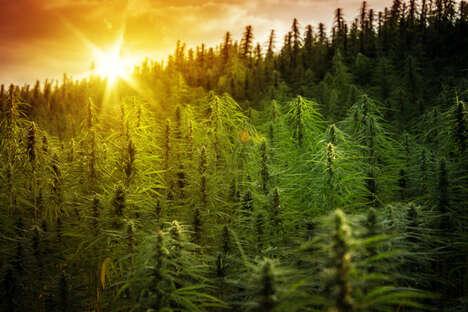 Reconciliation-Focused Cannabis Markets