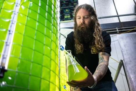 Microalgae Brewing Projects