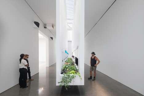 Edible Art Exhibitions