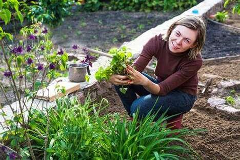 Beginner-Friendly Gardening Platforms